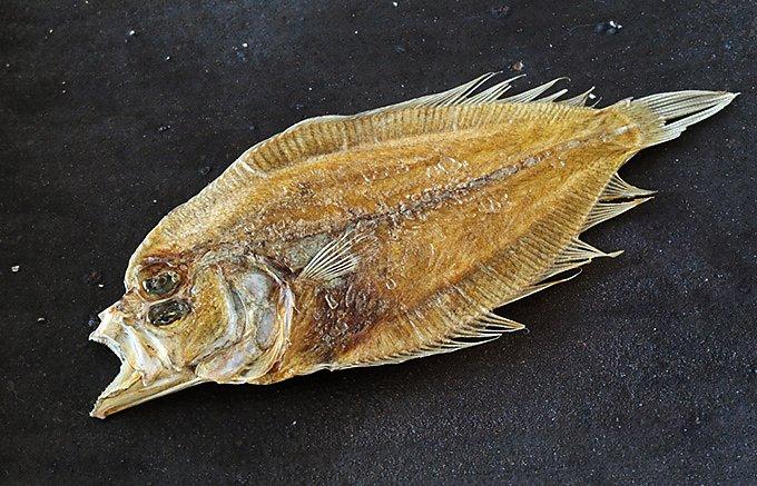魚介の滋味そのものを味わう!広島のあらたな名物「海鮮しぼり焼き」