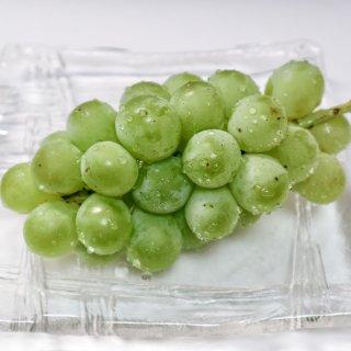 黄緑色の巨峰がある!?口コミで人気の『常陸青龍』は甘い果汁溢れる旬の味覚