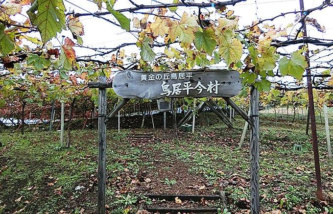 新春を寿ぐ日本のロマネ・コンティ「鳥居平今村 キュヴェ・ユカ・ルージュ」