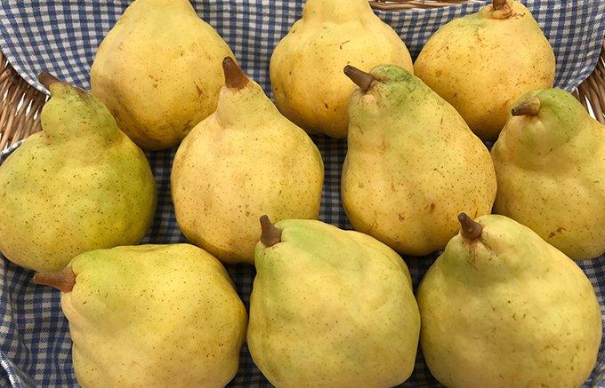 ラフランスより美味しい!江戸時代から9代続く新潟市にある仙六農園の「ルレクチェ」
