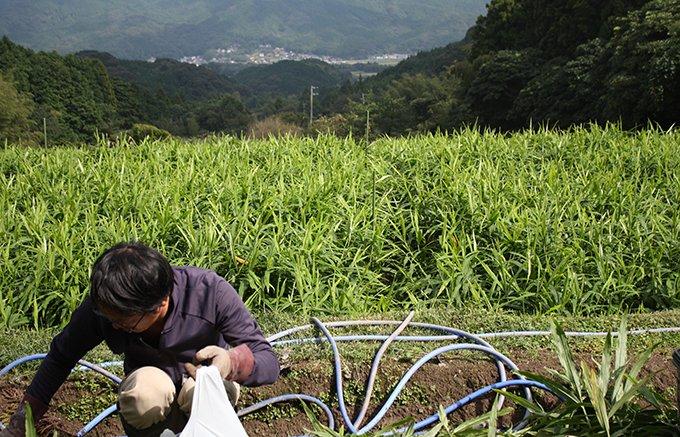 生姜の生産者が作る、kotokoto kitchenの生姜ジャム