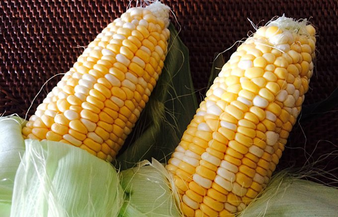 【期間限定】平均糖度15度以上!生で食べられるトウモロコシ「甘々娘」