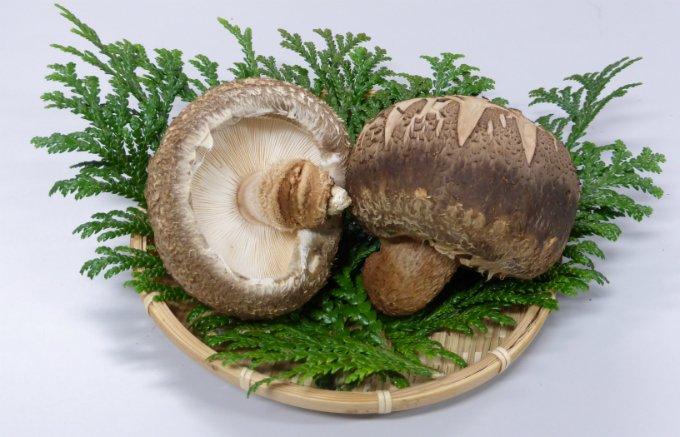「山のアワビ」とも呼ばれる、香りや風味が良く、肉厚さが魅力の「のとてまり」