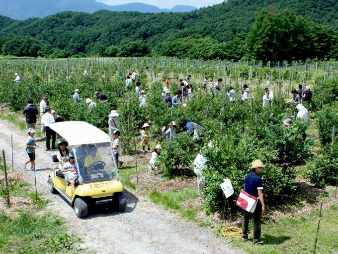 【鳥取県】情景も目に優しい国産ブルーベリー!奥大山ブルーベリーファーム