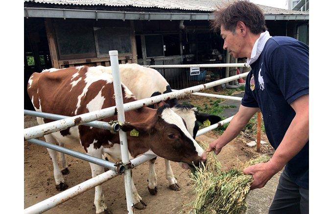 美しく健やかな牛の朝搾りミルクで作られたシルキーソフトクリーム