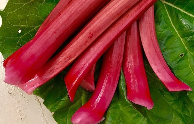 美味しくておしゃれなスイーツなら『島田農園』さんの真っ赤な「ルバーブ」にお任せ!