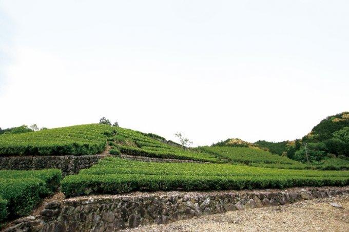 伊勢神宮御用達茶舗『芳翠園』の最高級銘茶「煎茶 名人憲太郎」