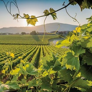 至高のスパークリングワイン「フランチャコルタ」