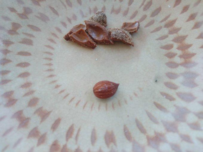種まで食べちゃう究極の梅干しがあった!