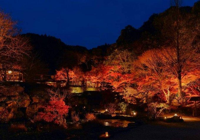 """福岡の山の中の名勝地で作られるすっぽんエキス入りはちみつ""""亀蜜"""""""