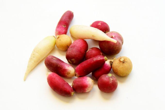新しく農家を始めた人たちで作る、地球に優しく美味しい野菜