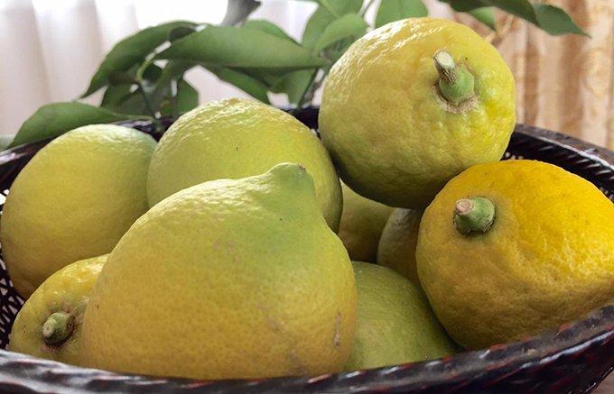 旬のレモンをたっぷり!レモネードに合わせたいイタリア産レモンのハチミツ