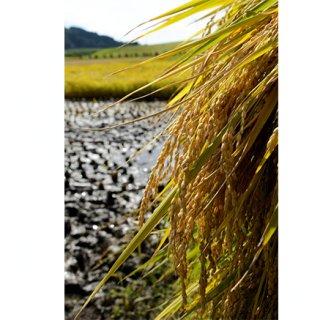 今も昔もめだかが泳ぐ!優しい水で作ったお米「門崎めだか米」