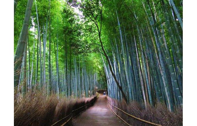 枝豆も涼しく見える!京都嵯峨野の最高級竹を使った逸品
