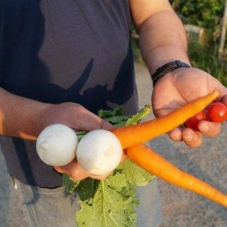 茨城県が誇る農薬、化学肥料を一切使用しない「樫村ふぁーむ」の野菜