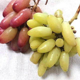 フルーツ通な方に贈りたいおしゃれな「山梨のブドウ」