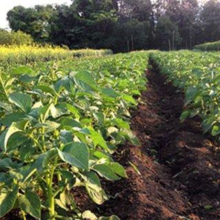 人参の美味しさに気づく 農薬・化学肥料不使用の人参ジュース