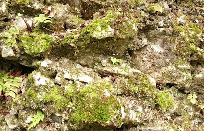 数千万年という年月を経た豊かな土壌と地形が生み出した雫「ぞっこん」