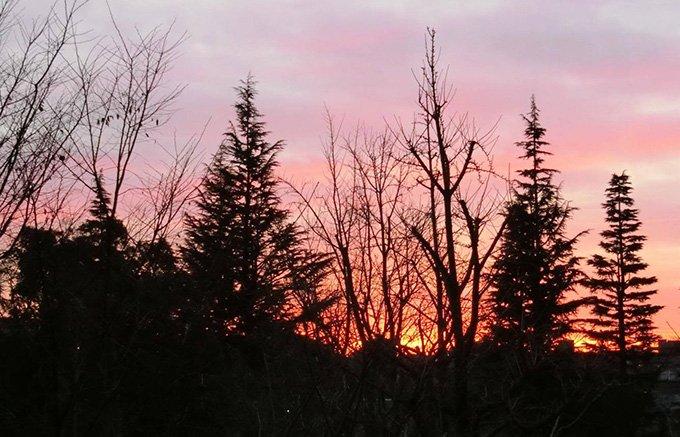 春はロゼ色。枕草子の一節を思い出させる、「ワイマラマ ヴァンロゼ2016」