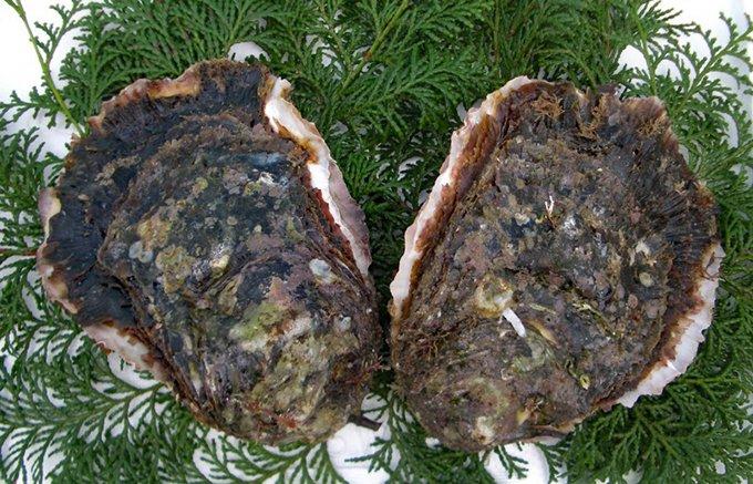 天草の海で4年の歳月をかけ育てられた極上の岩かき!浜崎水産「天草天領岩かき」