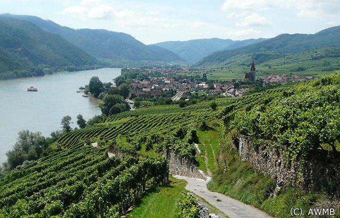 ベートーヴェンの家でもワインが作られている!?世界を虜にするオーストリアワイン