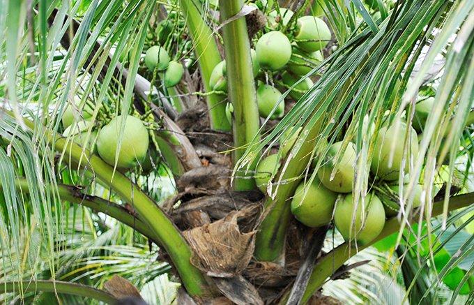 クセになる味!タイの食はココナッツからはじまる