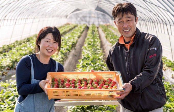 茨城県のいちごといえば、村田さん家のいちご!