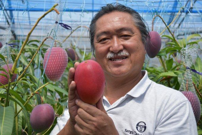 香り・甘さ・酸味のバランスが素晴らしい!宮崎県産の究極のマンゴー