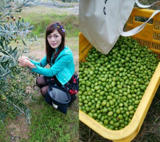 エメラルドグリーンに輝く究極の香川県産高級エキストラバージンオリーブオイル