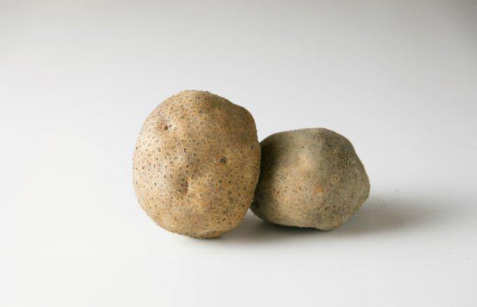 丸っこい形と、粘りも強いのが特徴!限られた地域で栽培されてきた希少な伝統野菜!