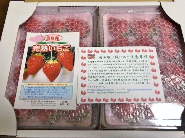 こんないちご食べたことない!香川の旅先で出会った絶品完熟いちご