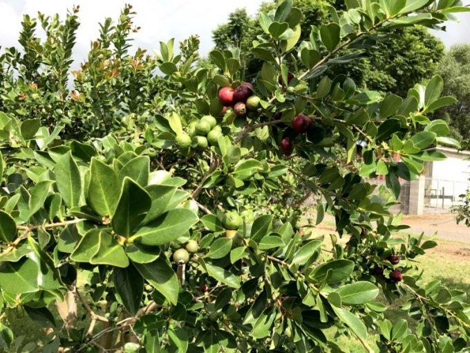 ハワイで買うならこれ!マウイの農園で採れたフルーツを使ったスプレッド