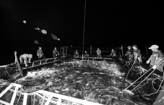 海から46秒の旨さ! 漁師が食べたい家族に食べさせたい安心の鮭