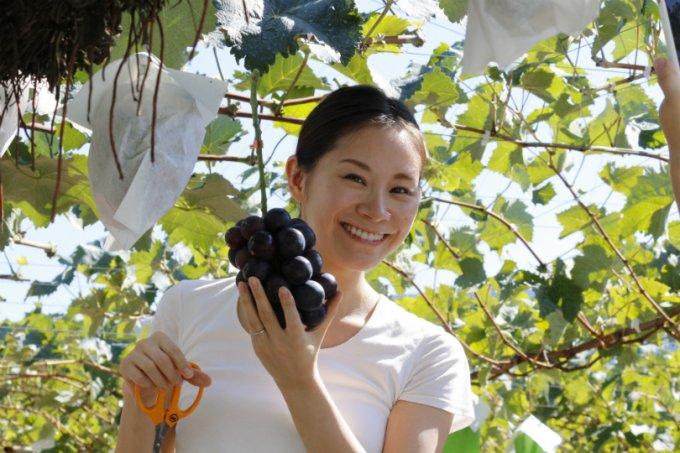 【イベント】ナガノパープルって知ってる?ブドウ畑からスイーツまでまるごと堪能