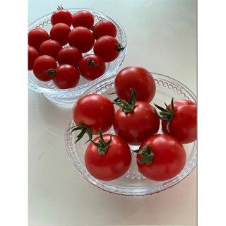 料理に使うにはもったいない!野菜ソムリエサミットで金賞、銀賞を受賞した甘いトマト