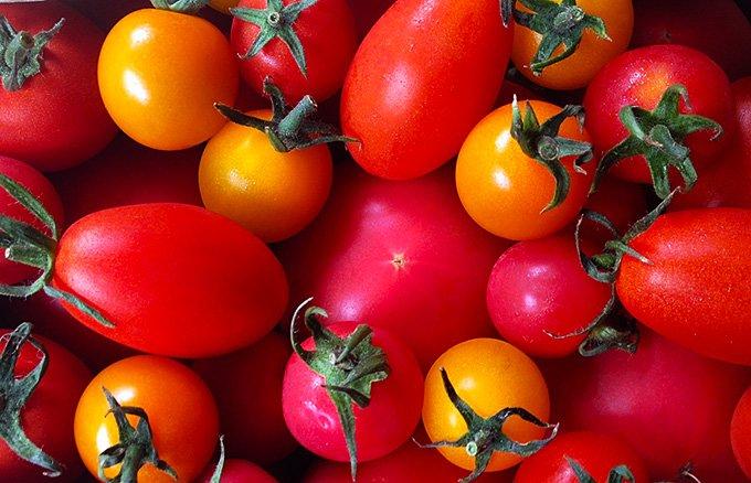 濃厚な味わいと、甘みと酸味のバランスが抜群な山形・井上農場の「樹熟トマト」