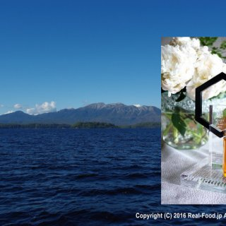 はちみつコンテスト3年連続受賞レザーウッドハニーはタスマニアの食べる香水