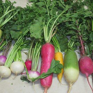 完全無農薬野菜のカラフルブーケ!心も体も元気!テンションアップ!