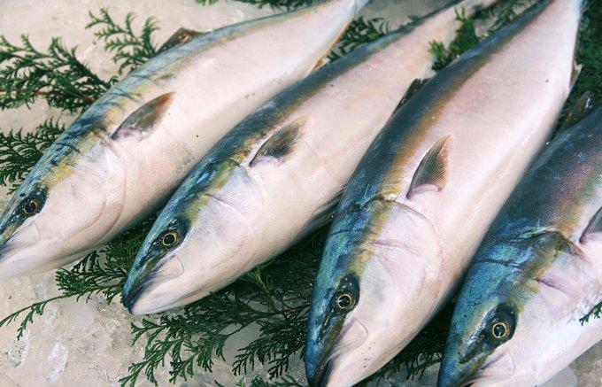 獲れたての魚を究極の鮮度で加工!他にはない身の締り「漁師一家」