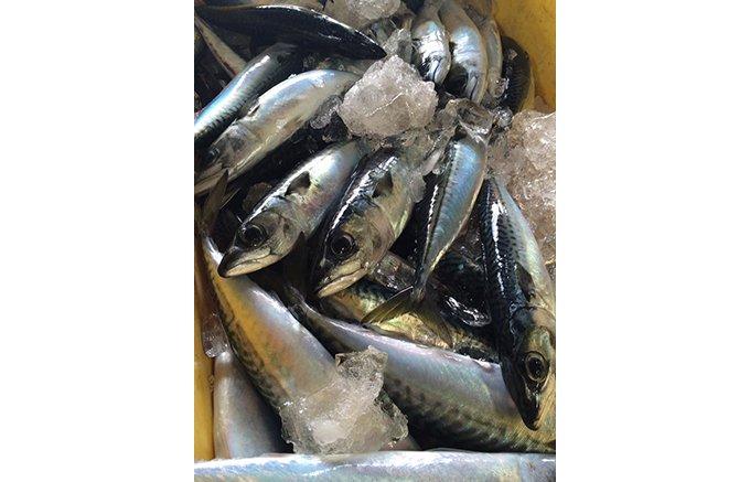いとう漁協サバ男くんすり身(R)を使った魚肉ナゲット「いとうナゲット」