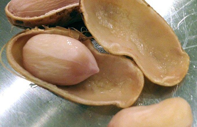 これを食べるために千葉に行きたくなる!落花生の街のピーナッツ土産