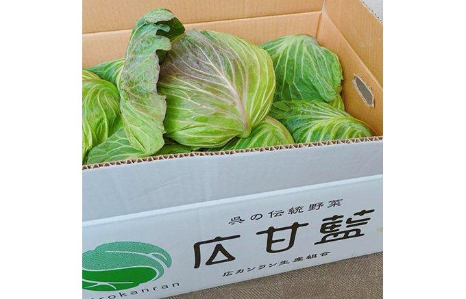 50年ぶりに復活した幻の伝統野菜 広甘藍(ひろかんらん)