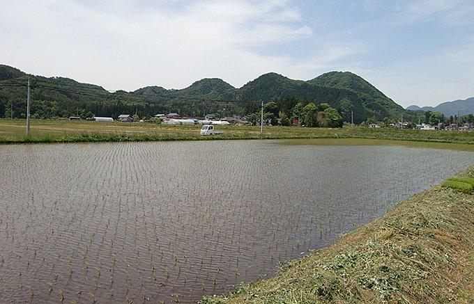 食味世界一のお米、福島・天栄村の黄金の稲穂から取れる「天栄米」を知ってますか?