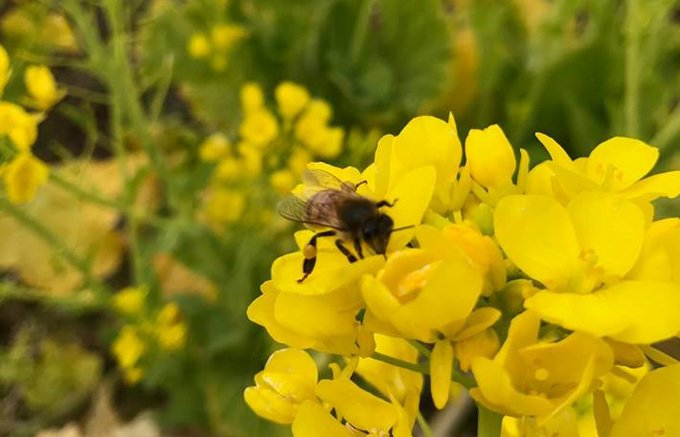 ミツバチと一緒に営む農業!野菜から生まれたはちみつ「Veg honey」