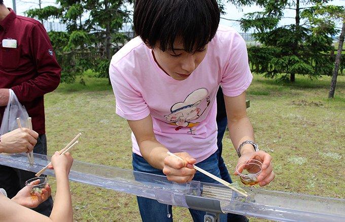【秋田県】夏の風物詩「流しじゅんさい」とじゅんさい祭り