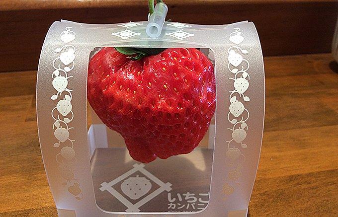 1個1,000円のイチゴ「とろける香りいちご」が1年中「旬」の秘密とは!?