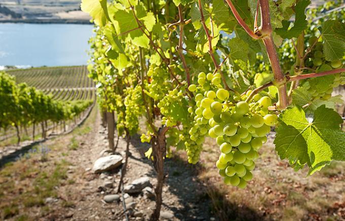 ニュージーランド産の「ワイン」に世界が注目されるわけは?