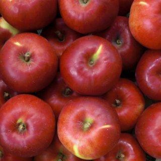 煮崩れしにくく、酸味もしっかり味わえる!北海道産りんご「あかね」