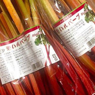 【ビューティー野菜】信州の「赤いルバーブ」でキレイをサポート
