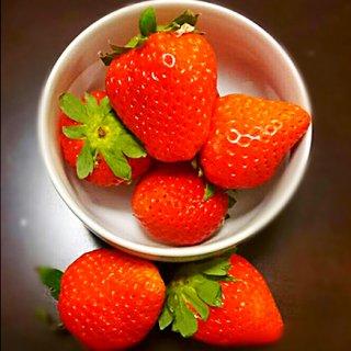 美味しさの秘密は「土」!大分・野津町産の愛情いちご
